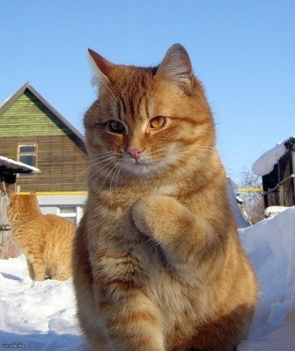 Кот с табличкой не беспокоить сижу на порносайтах