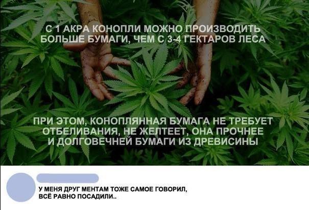 Это конопля мой друг что делают из конопли в россии
