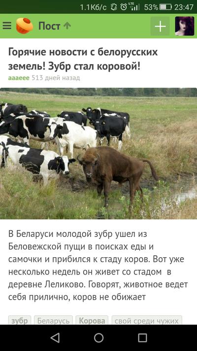 Секс в танке вижу корову