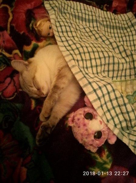 Вызов принят Киска на кровати, Кот, Язичок, Вызов принят