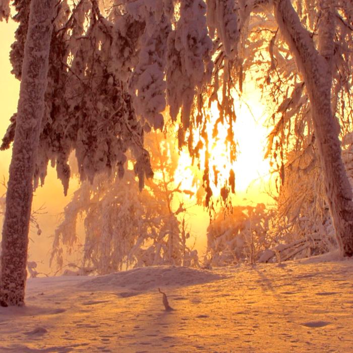 Зима  в лесу Зимнее время, Зима, Зимний лес, Фотография, Зимняя сказка, Красивое, Снег