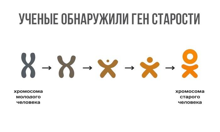 Гены старости)