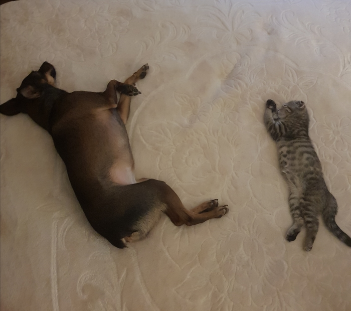 Когда ты - гроза кошек, но тут появляется одна, которой на тебя начхать... Кот, Собака, Тщетность бытия, Мир?, Равнодушие, Длиннопост