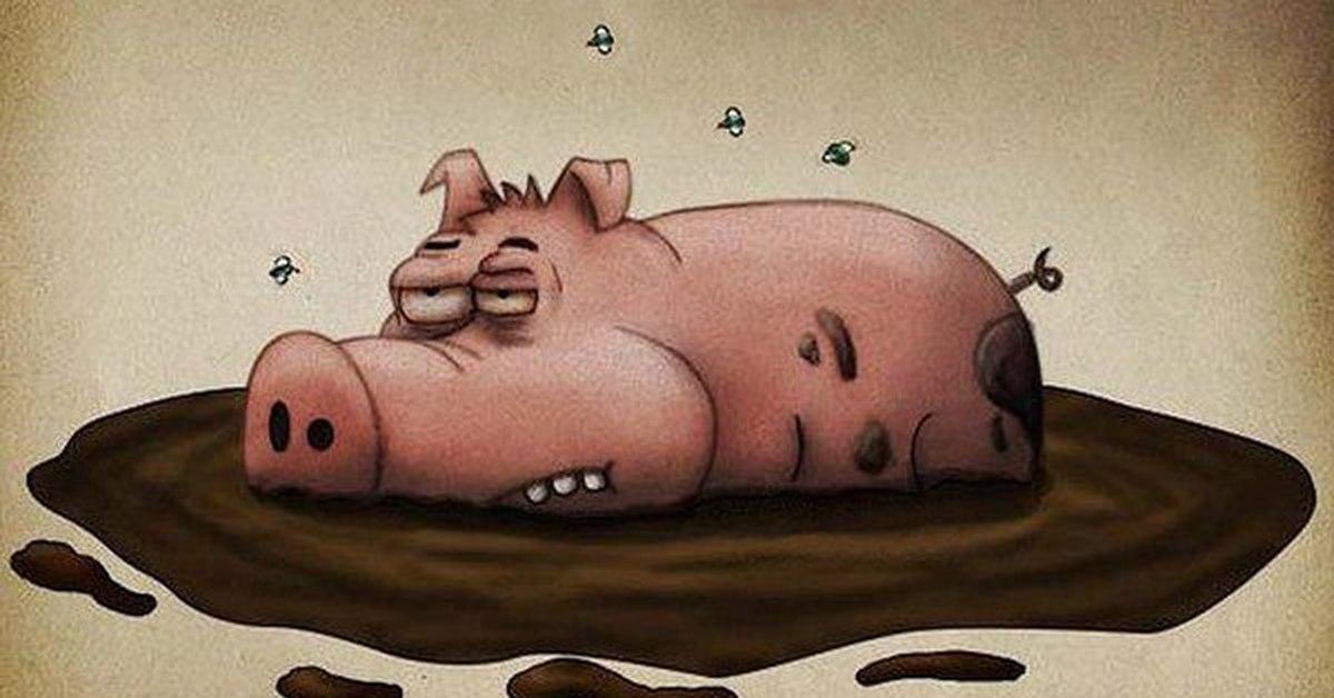 Прикольные рисунки про свинью, котами картинками надписями