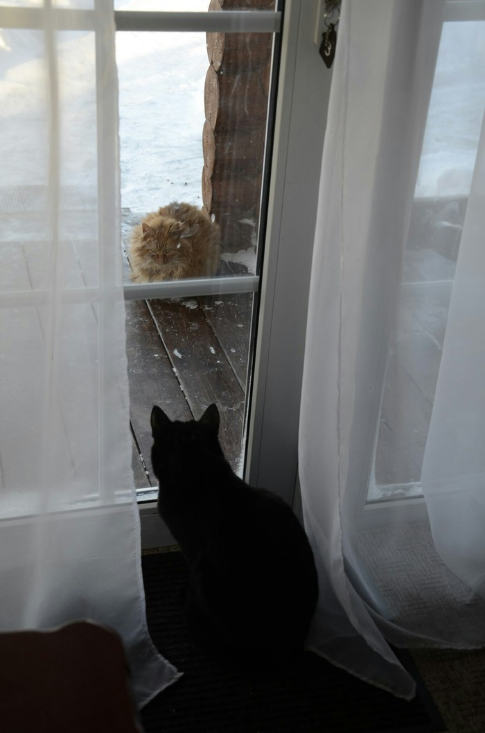 Две стороны кошачьей жизни