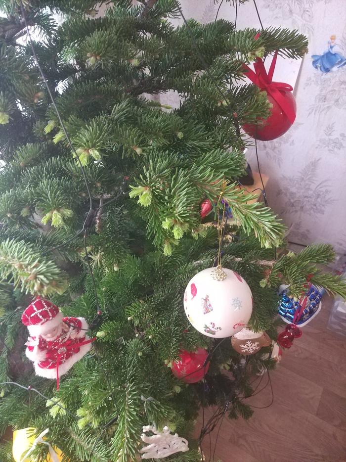Живая ёлка Новый год, Ёлка, Длиннопост