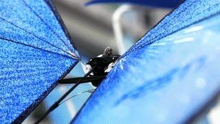 Бионические роботы от Festo Роботы наступают, Биоробот, Будущее, Робототехника, Видео, Гифка, Длиннопост
