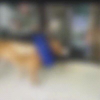 Шереметьевский приют. Гамлет: как мы ставили собаку на лапы Шереметьевский приют, Собаки и люди, В добрые руки, Собака, Помощь, Гифка, Длиннопост