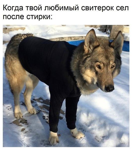 https://cs10.pikabu.ru/post_img/2018/01/23/5/1516689419197945497.jpg