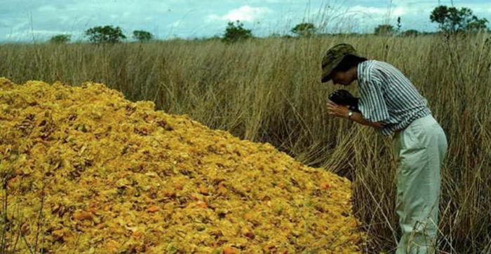 Апельсиновые корки, изменившие мир Экология, Интересное, Апельсин, Наука, Александр Мурашев, Нормальные люди, Длиннопост