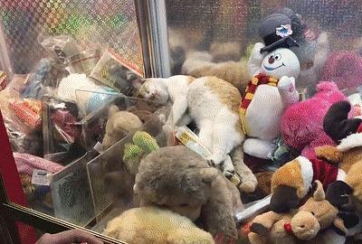 """Игровой автомат """"Достань кота"""" Кот, Игровые автоматы, Игровой автомат, Игрушки, Мужчина, Снеговик, Несколько гифок, Гифка"""