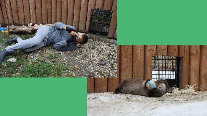 Когда люди и животные общаются много лет (ЧелЗоо эдишн) Челябинский зоопарк, Животные, Животные как люди, Длиннопост