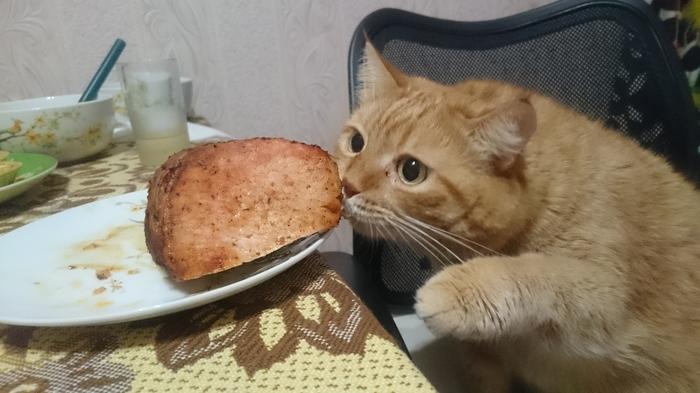 3 стадии принятия неизбежного по-кошачьи Кот, Кот-Воришка, Мясо, Вуська и Соня