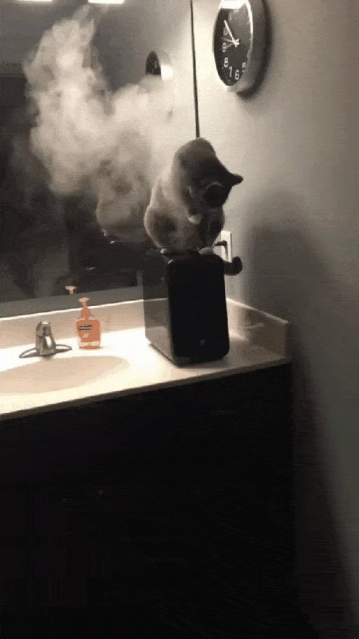 Кот вейпер