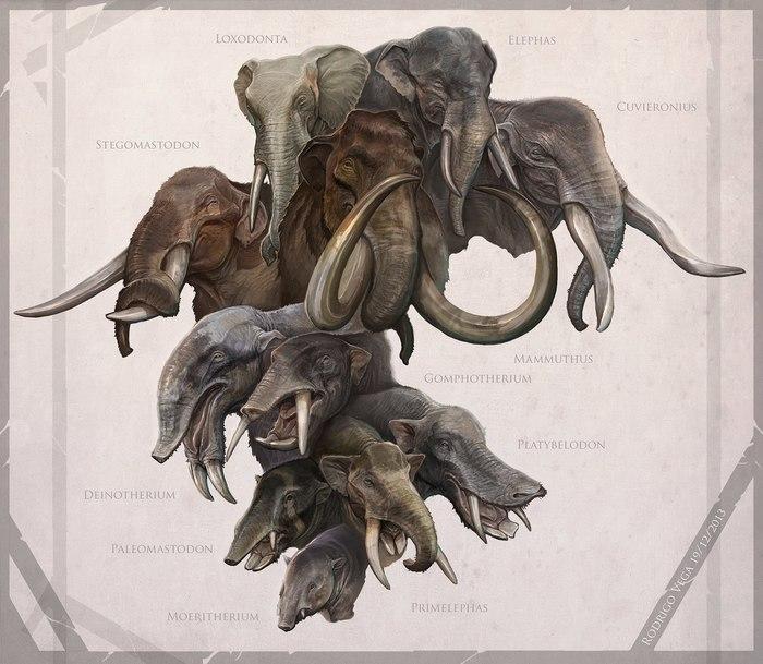 Время хоботов. Палеонтология, Палеоарт, Хоботные, Слоны, Доисторические животные, Интересное, Бивень, Прошлое