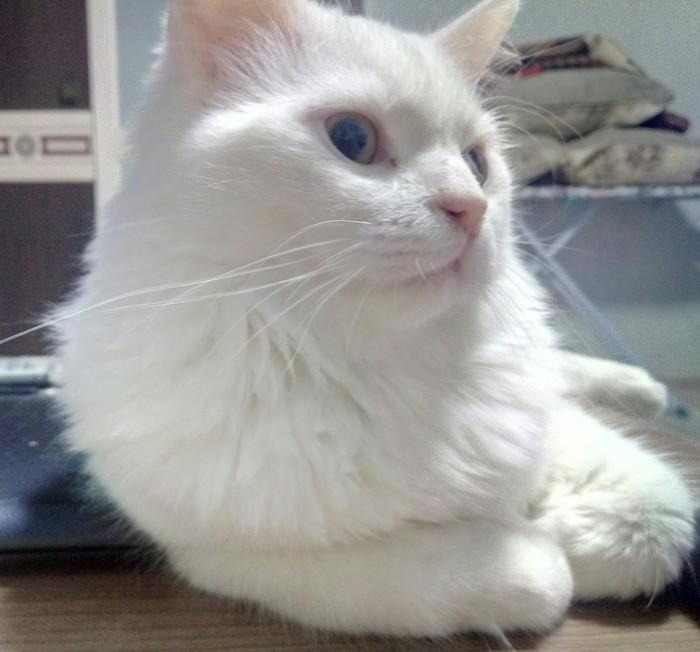 Когда рассказываешь коту историю, а он не верит((( Кот, Не верит, Реальная история из жизни, Как дальше жить?, Как вернуть, Доверие, Кота?