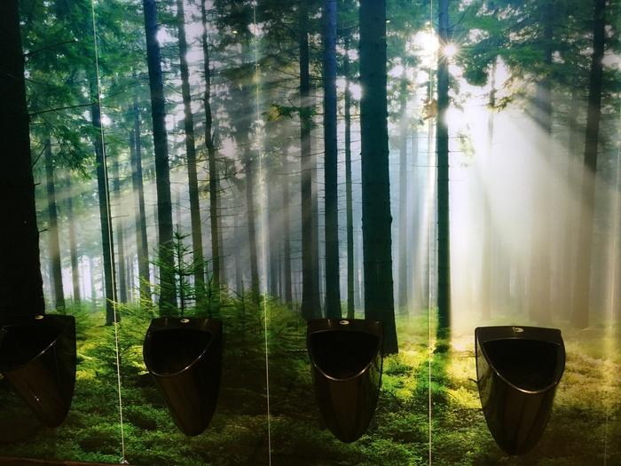 Сила природы Лес, Пивная, Туалет, Германия