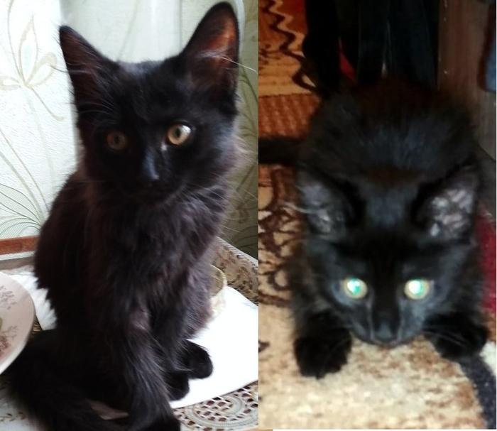 Котенок ищет дом в Красноярске Кот, Кошка отдам бесплатно, Отдам, Помощь животным, Котенок найденыш, В добрые руки, Красноярск, Длиннопост