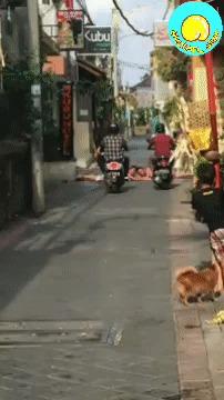 Ибо нефиг Мопед, Бали, Лежачий полицейский, Гифка