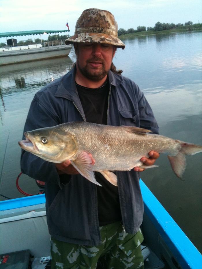 Люблю июнь-жарко и рыба клюёт!) Рыбалка, Жерех, Астраханская Область, Длиннопост