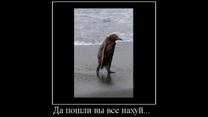 Время баянов. Пингвины, Баян, Старость