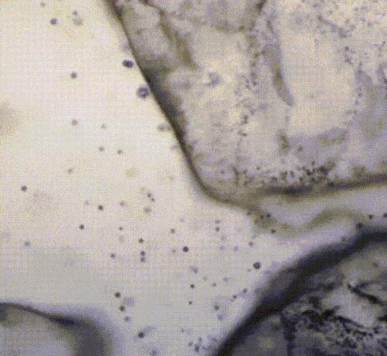 Растворение соли при стократном увеличении