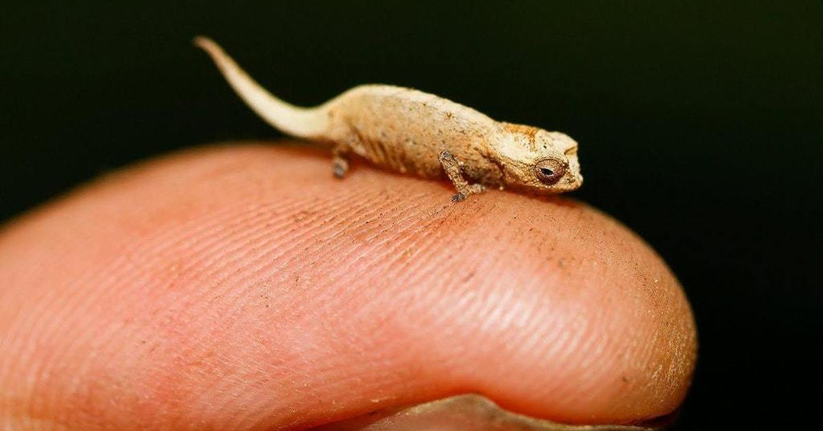 the smallest animal in the world