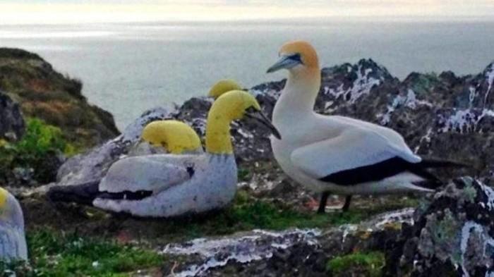 Последний герой Олуша, Птицы, Новая зеландия, Одиночество, Миссия