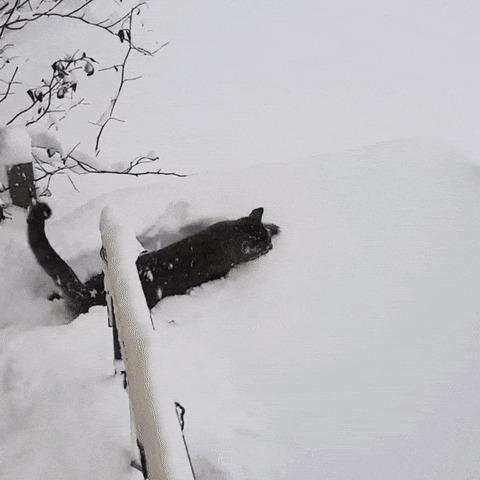 Снегоход.