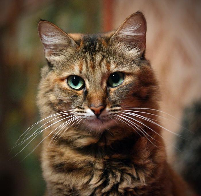 Я слышал, тут любят котиков? Фотография, Кот