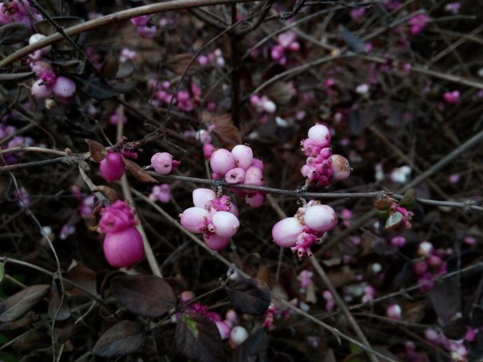 Spring is coming Краснодар, Весна, Цветы, Длиннопост