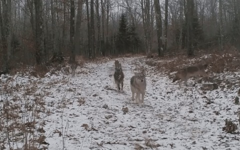 Санитары леса патрулируют территорию