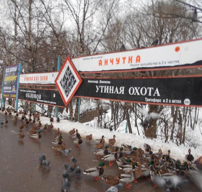Тем временем в Вологде Утиная охота, Утка, Птицы, Нарочно не придумаешь, Пьеса, Длиннопост