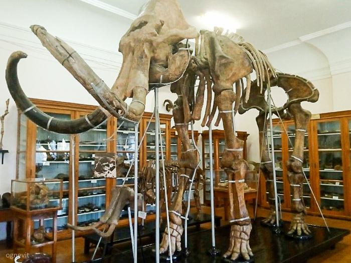 Палеонтологический музей в Одессе. Часть первая палеонтология, одесса, музей, длиннопост