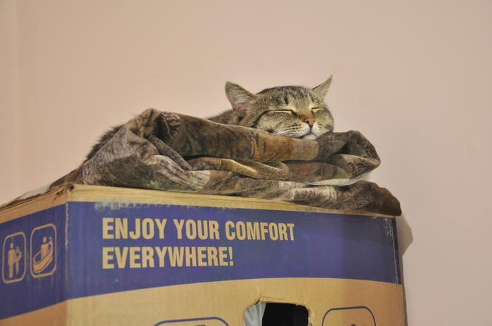 Наслаждайся комфортом везде Кот, Коробка и кот, Кот фото, Переезд