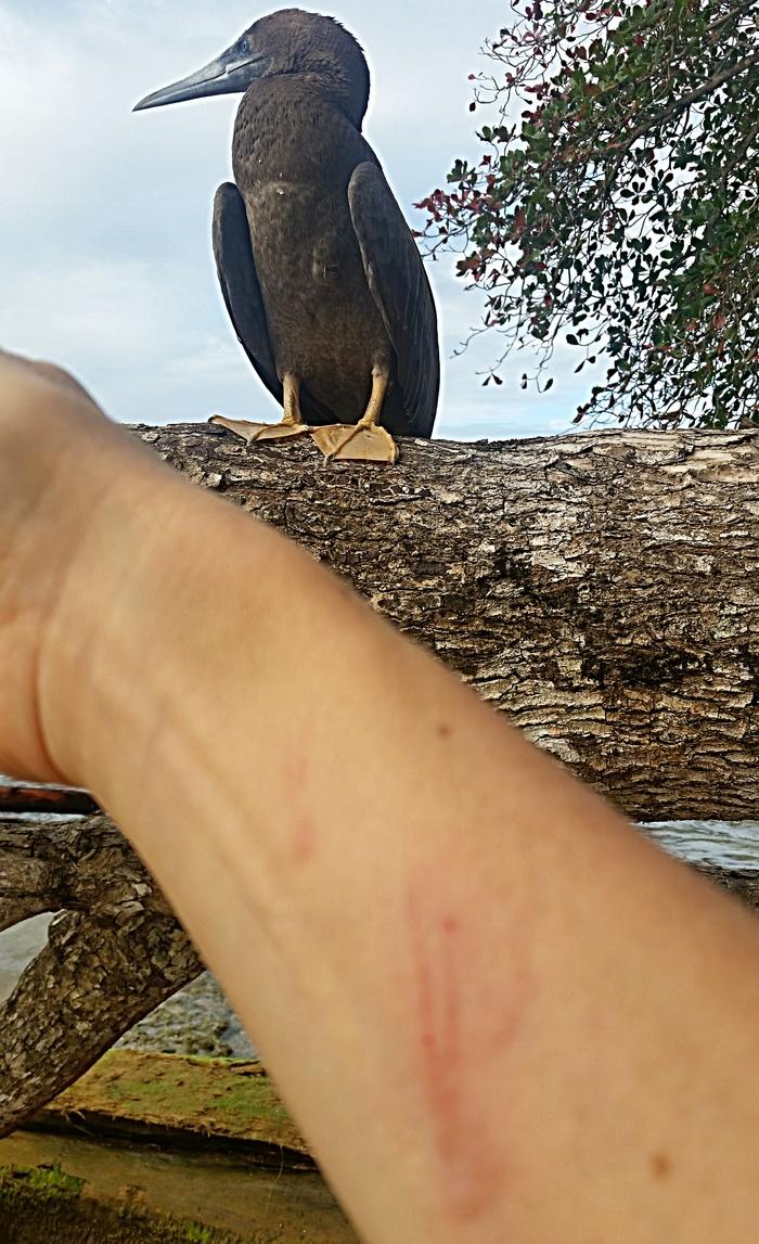 Олушенька Всё как у зверей, Тимонова, Коста-Рика, Олуша, Слеток, Укус, Птицы, Держубля, Длиннопост