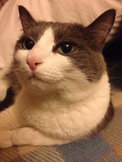 Ищем котят без мамы Кот, Доброта, Помощь животным