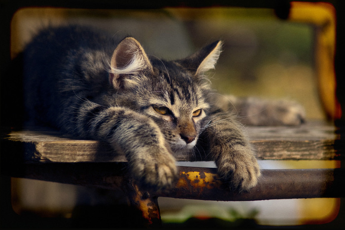 """Когда прочитал все посты в """"горячем"""" Моё, Nikon, Кот, Жаркое лето 2010"""