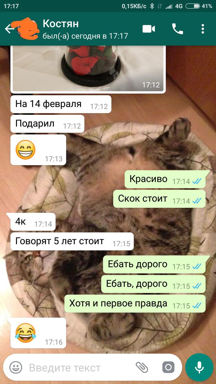 Каламбурчик Whatsapp, Мат, 14 февраля, Длиннопост