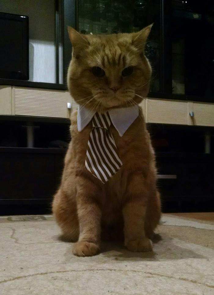 Моему подписчику. Кот, Фотография