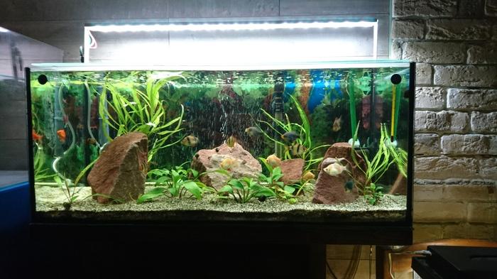 """Моя """"маленькая"""" банка. Длиннопост Авкариум, Аквариумные рыбки, Длиннопост"""