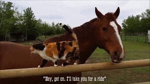 Удобненько так. Лошади, Кот, Дружба, Ферма, Гифка, Животные