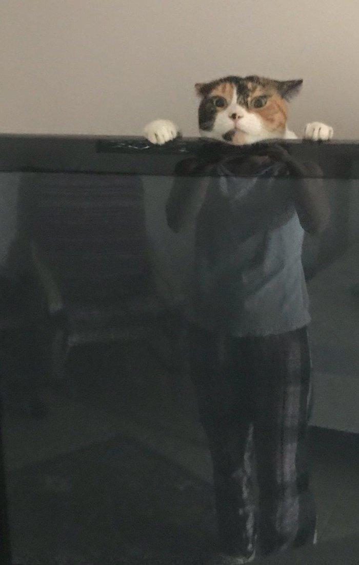 Моя девушка  прислала фото нашего кота, играющего за телевизором Кот, Отражение