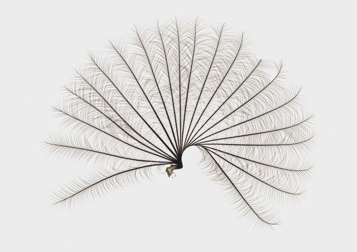 Как насекомые завоевали водное царство с помощью пары генов Перевод, Озвучка, Длиннопост, Наука, Биология, Насекомые, Лига биологов, Newочем