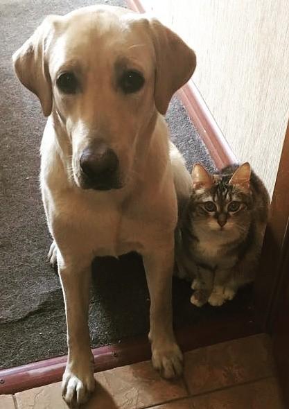 Никогда не забывайте про своих питомцев Собака, Лабрадор, Курильский бобтейл, Кот