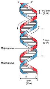 ДНК глазами программиста Копипаста, Geektimes, Перевод, Днк, Генетика, Программирование, Научпоп, Биотехнологии, Гифка, Длиннопост