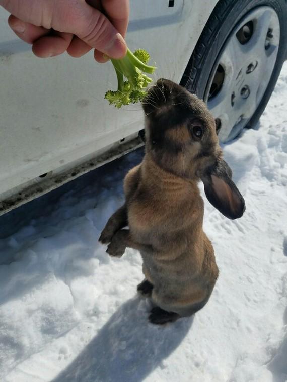 Нашел этого парня под моей машиной этим утром. Покормил брокколи и морковкой