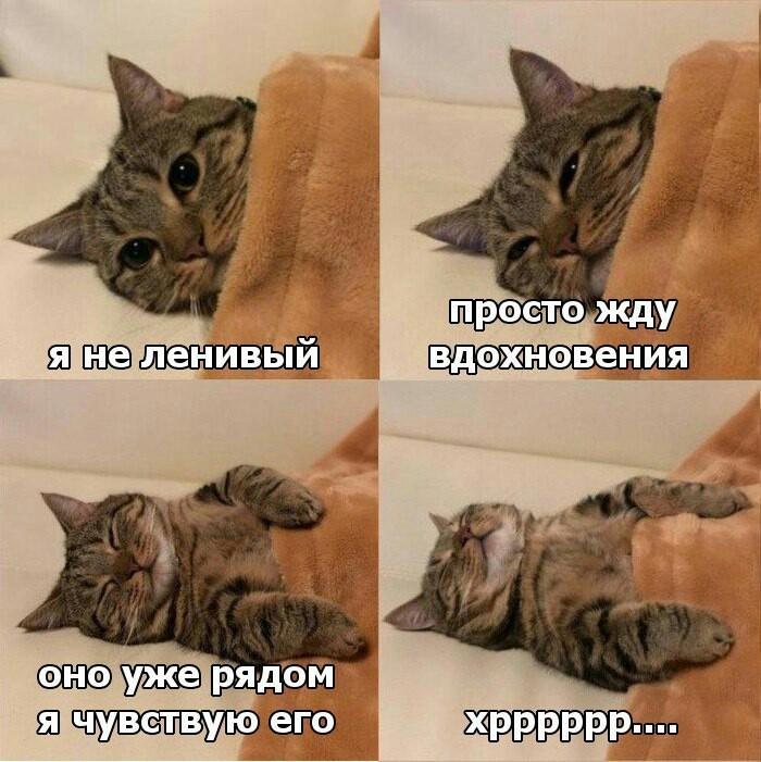 Вдохновение кот, вдохновение, сон, лень, картинка с текстом