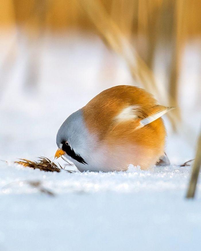 Angry Birds в природе птицы, Дикая природа, длиннопост, фотография, Подборка