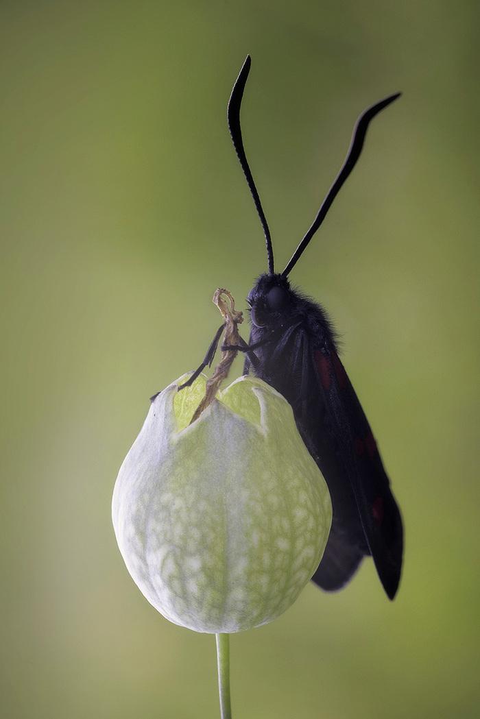 Приворотное зелье я варю в котелке... Фотография, Макросъемка, Бабочка